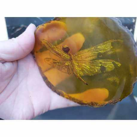 Libellule fossile dans une pierre d'Ambre
